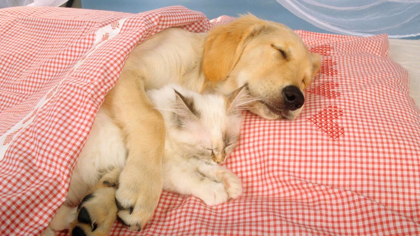 Guardería de mascotas