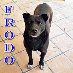 Frodo (Tris)