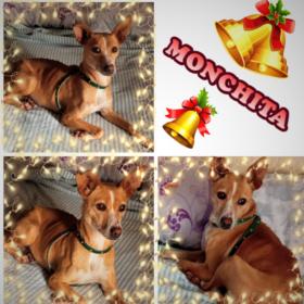 Monchita