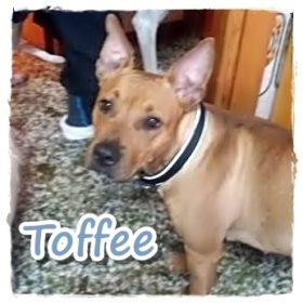 Toffee/Lola