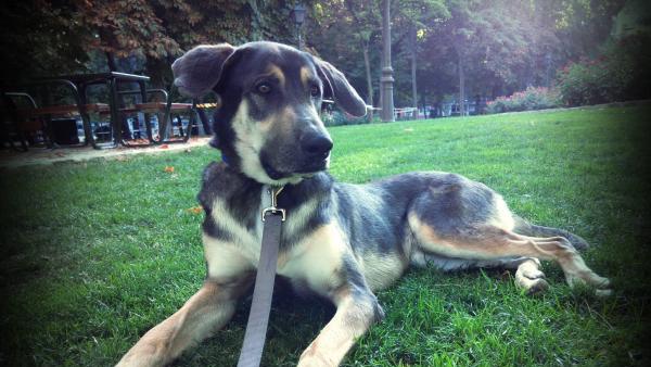 adopcion-perro-madrid