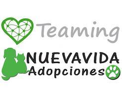 teaming-publicidad